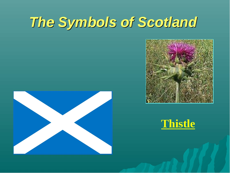 The Symbols of Scotland Thistle