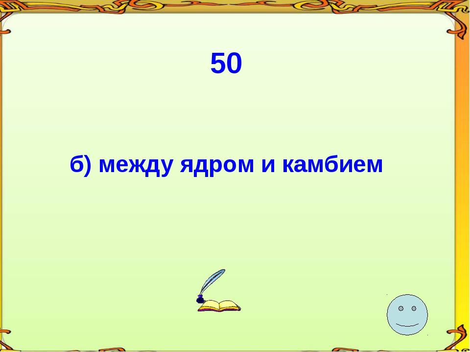 50 б) между ядром и камбием