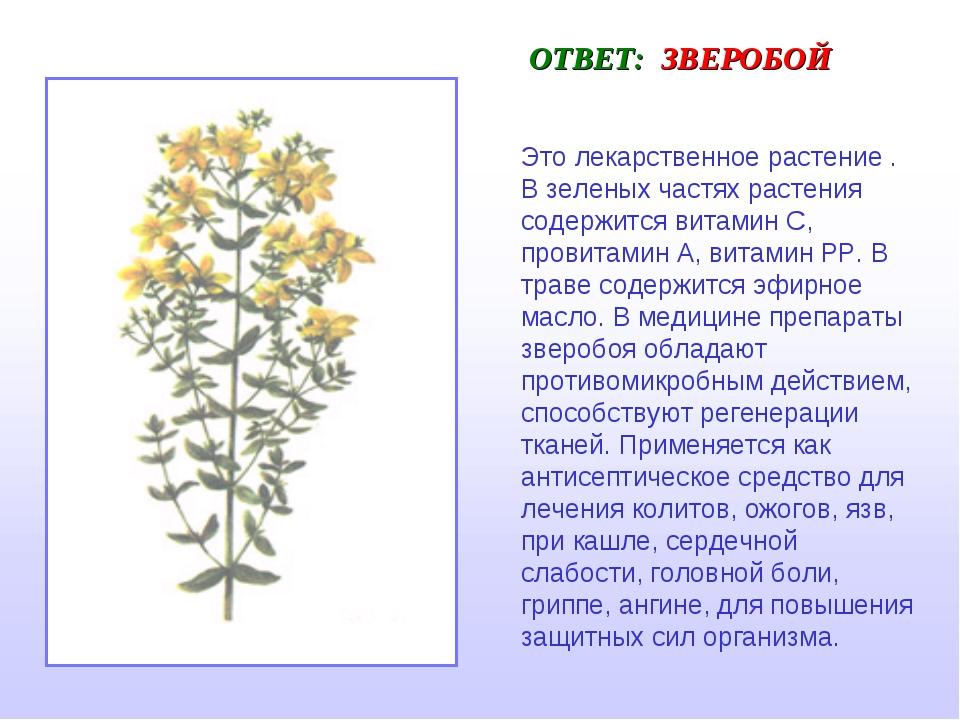 ОТВЕТ: ЗВЕРОБОЙ Это лекарственное растение . В зеленых частях растения содерж...