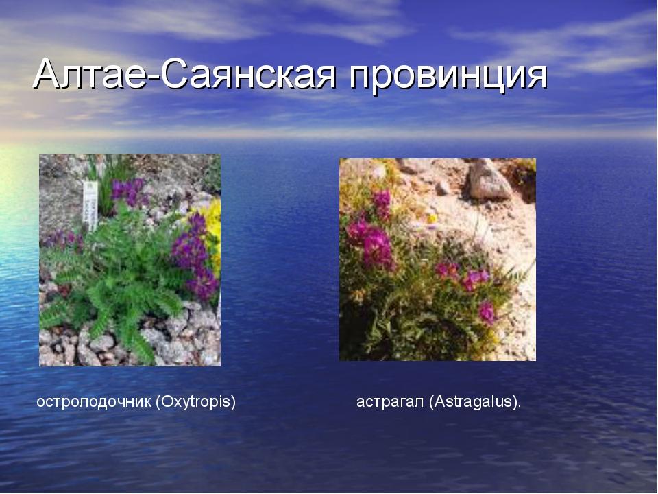 Алтае-Саянская провинция остролодочник (Oxytropis) астрагал (Astragalus).