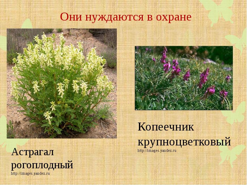 фотографии растений которые нуждаются в охране наличии широкий выбор