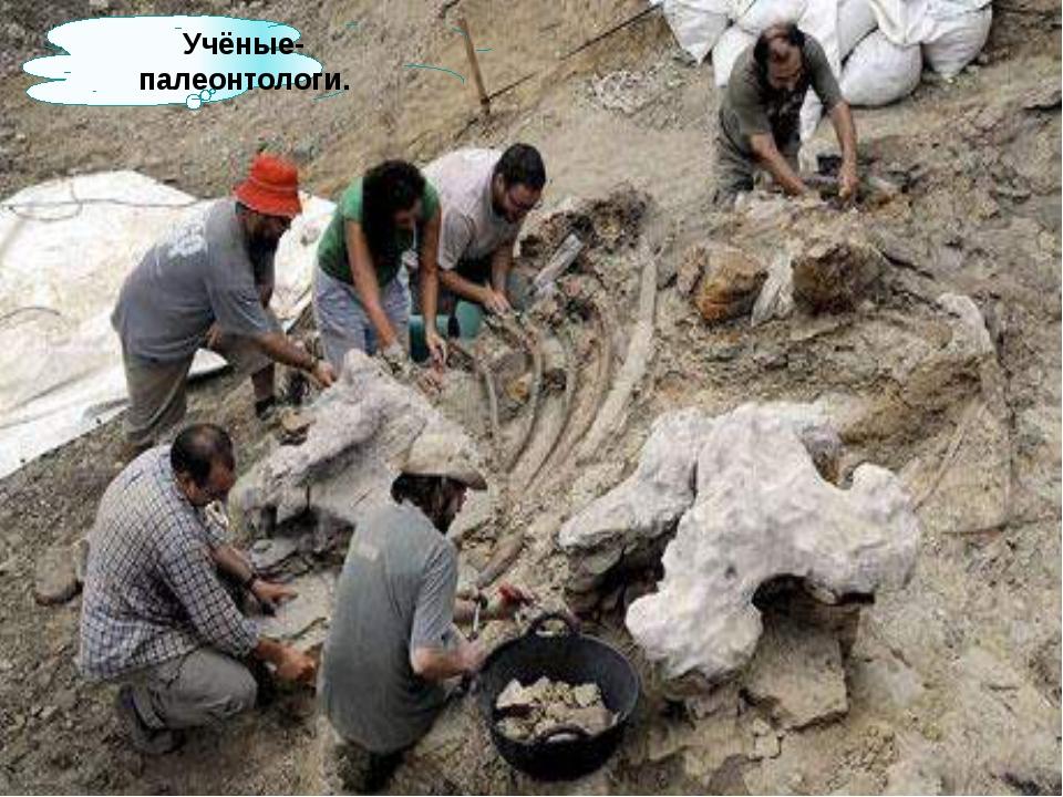 Учёные-палеонтологи.