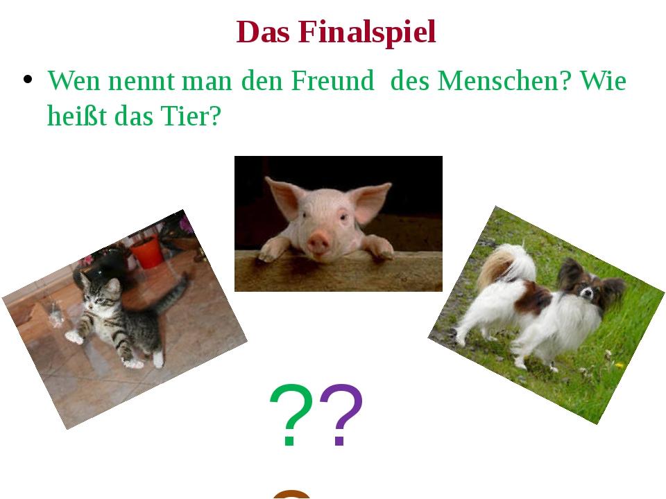 Das Finalspiel Wen nennt man den Freund des Menschen? Wie heißt das Tier? ???