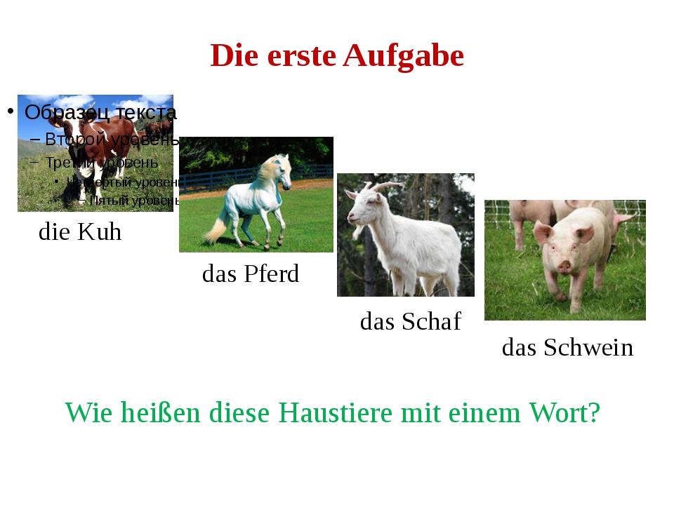 Die erste Aufgabe die Kuh das Pferd das Schaf das Schwein Wie heißen diese Ha...