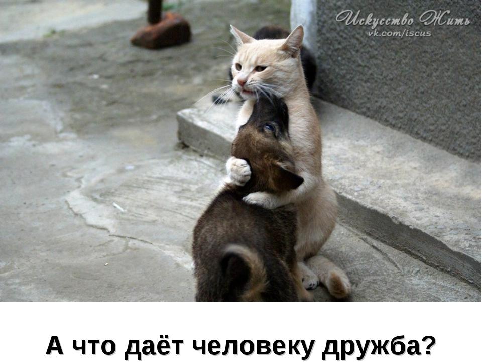 А что даёт человеку дружба?