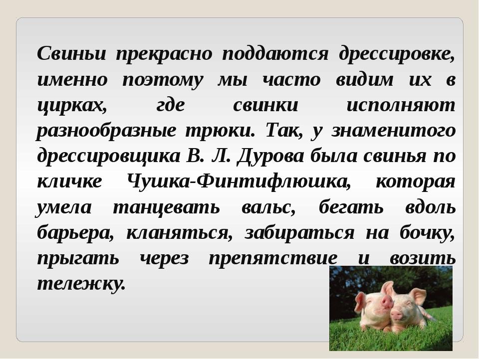 Свиньи прекрасно поддаются дрессировке, именно поэтому мы часто видим их в ци...