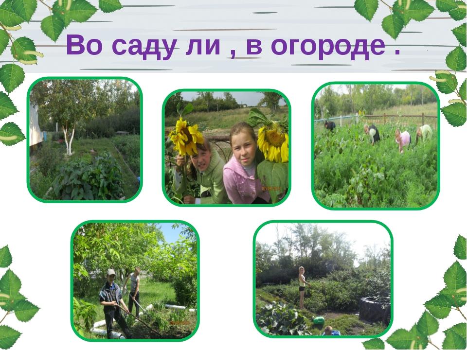 Во саду ли , в огороде .