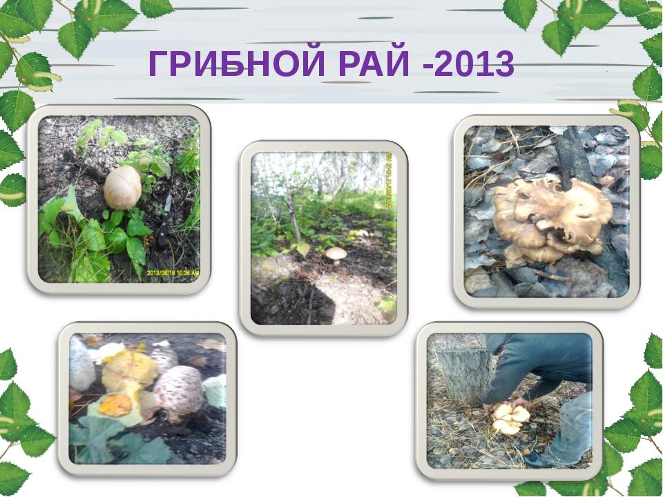 ГРИБНОЙ РАЙ -2013