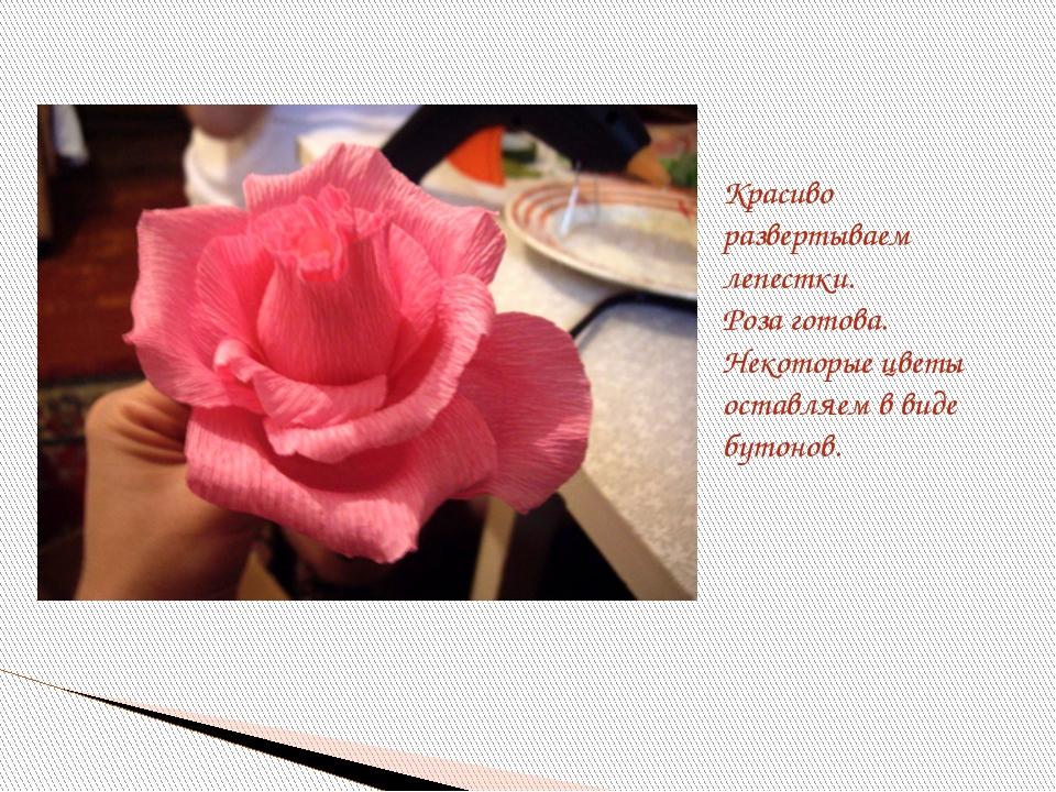 Красиво развертываем лепестки. Роза готова. Некоторые цветы оставляем в виде...