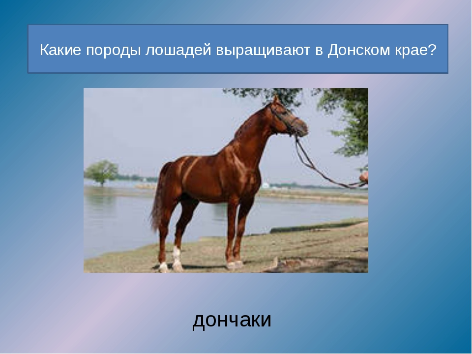 Какие породы лошадей выращивают в Донском крае? дончаки