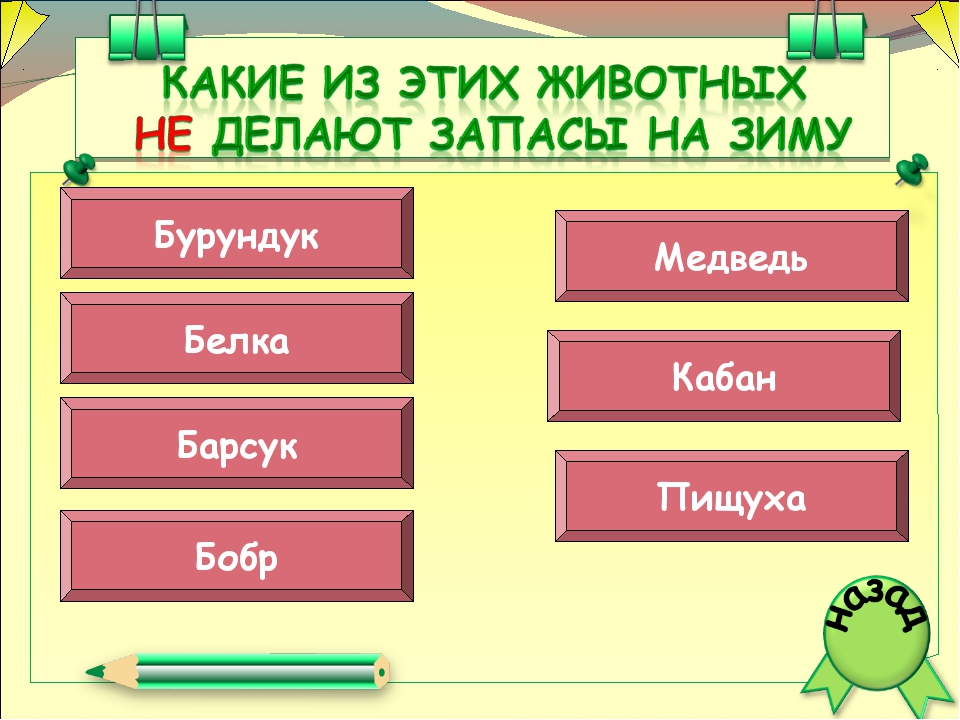 Барсук Бобр Пищуха Медведь Кабан Бурундук Белка