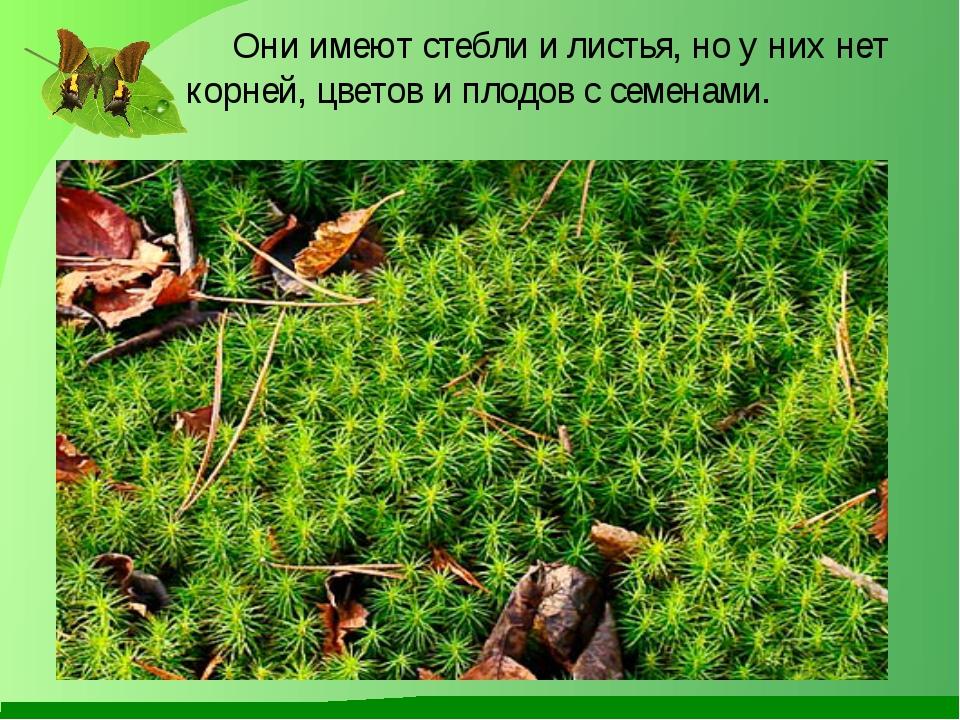 Они имеют стебли и листья, но у них нет корней, цветов и плодов с семенами.