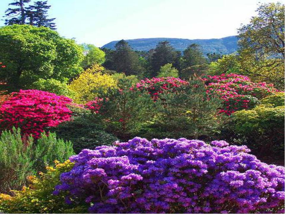 Цветковые растения имеют корни, стебли, листья, цветы и плоды. .