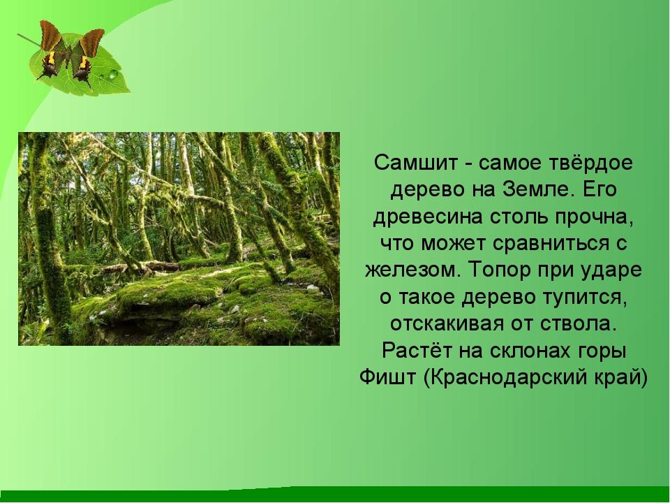 Самшит - самое твёрдое дерево на Земле. Его древесина столь прочна, что може...