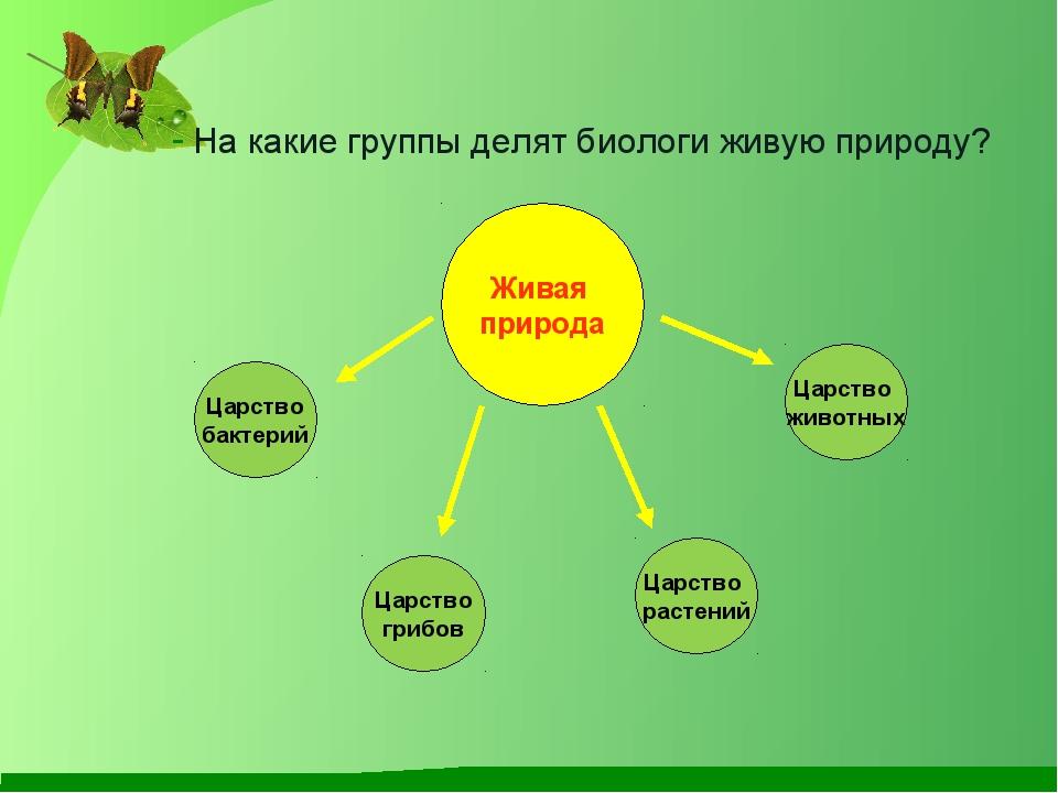 На какие группы делят биологи живую природу? Царство бактерий Царство грибов...