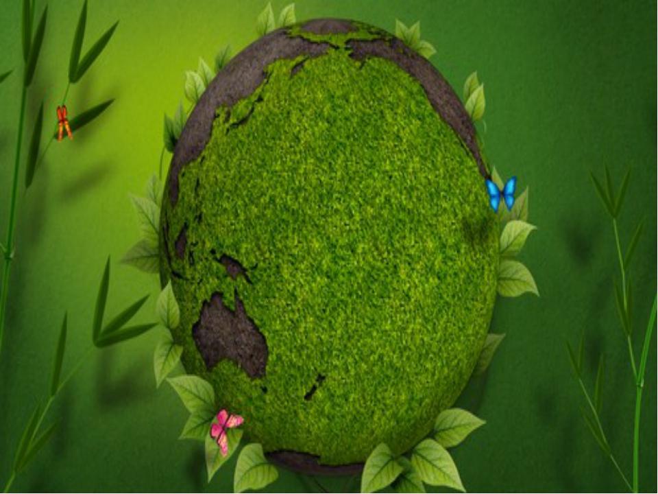Царство растений насчитывает  около 350.000 видов. Растения – это зеленая о...