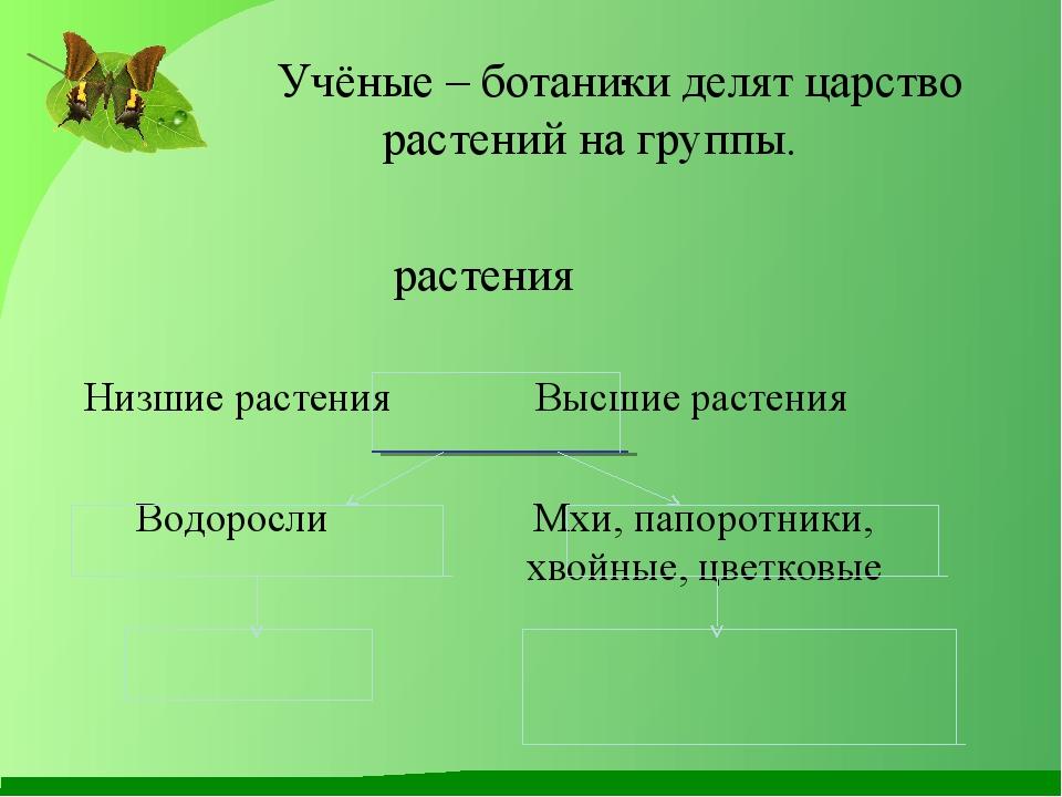 . Учёные – ботаники делят царство растений на группы.  растения Низшие...