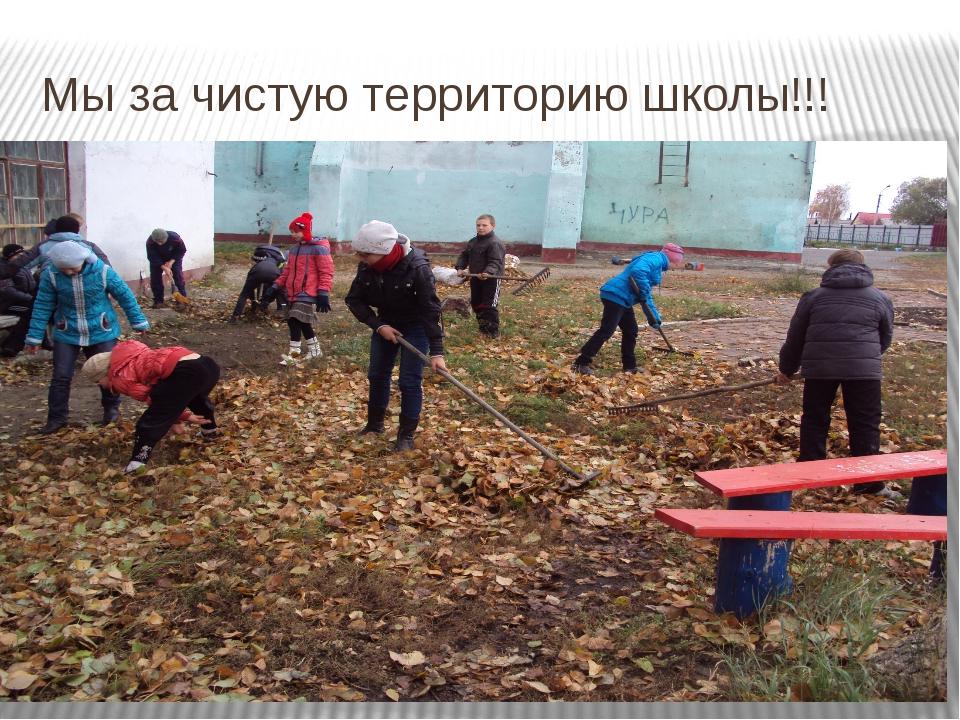 Мы за чистую территорию школы!!!