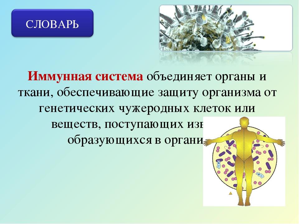 Иммунная система объединяет органы и ткани, обеспечивающие защиту организма о...