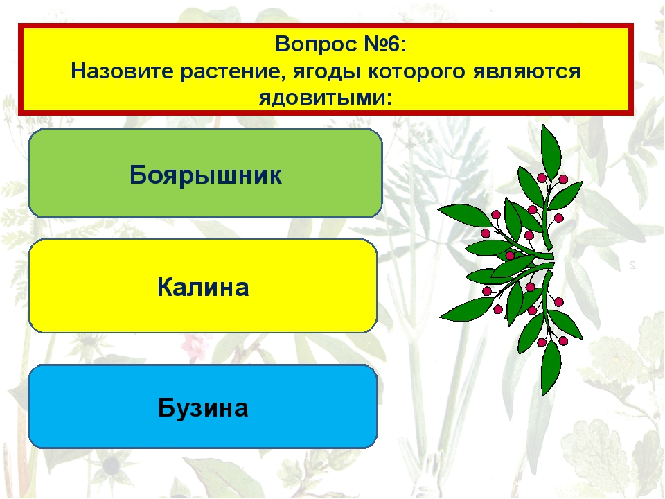 Вопрос №6: Собирая ягоды в лесу, помните: Все ягоды, растущие в лесу являются...