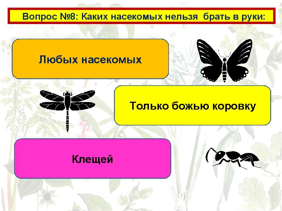 Вопрос №8: Каких насекомых нельзя брать в руки: Любых насекомых Только божью...