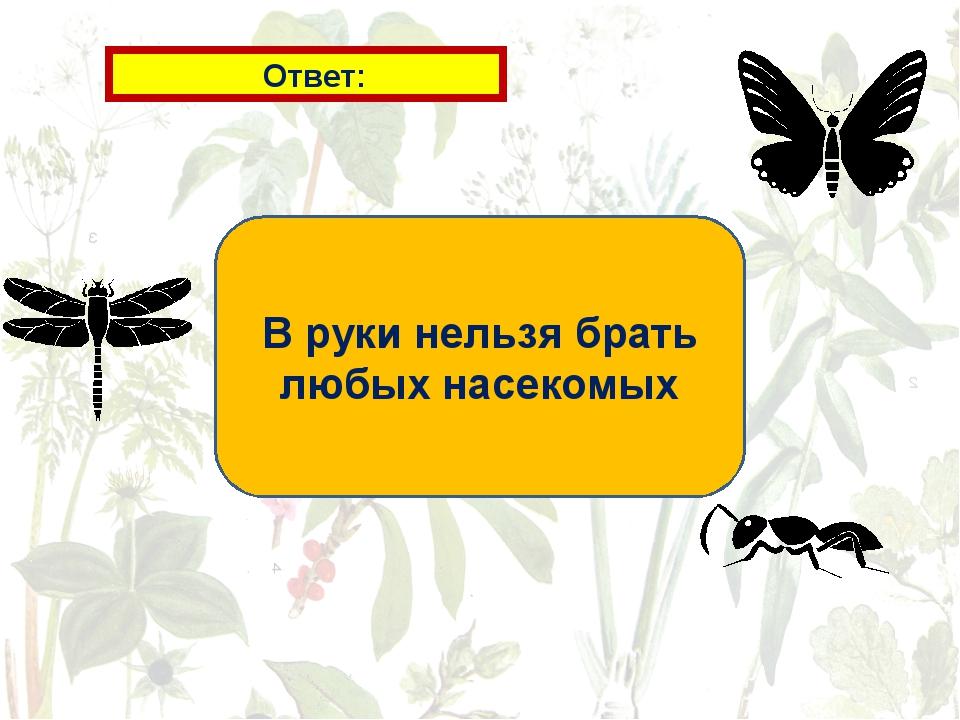 Ответ: В руки нельзя брать любых насекомых