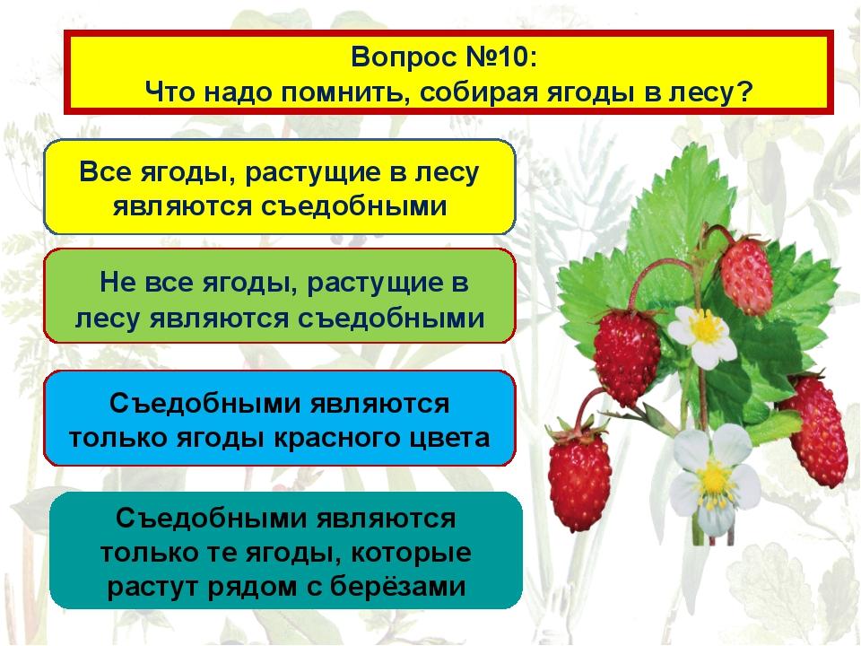 Вопрос №10: Что надо помнить, собирая ягоды в лесу? Все ягоды, растущие в лес...