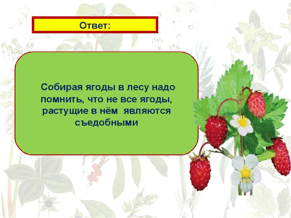 Ответ: Собирая ягоды в лесу надо помнить, что не все ягоды, растущие в нём яв...