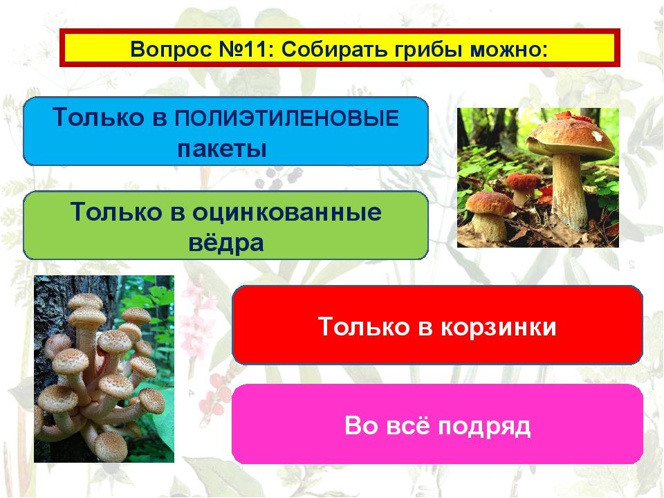 Вопрос №11: Собирать грибы можно: Только в ПОЛИЭТИЛЕНОВЫЕ пакеты Только в оци...