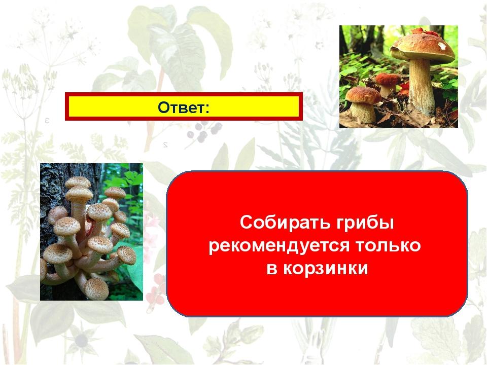 Ответ: Собирать грибы рекомендуется только в корзинки