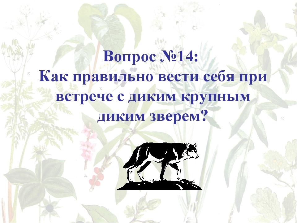 Вопрос №14: Как правильно вести себя при встрече с диким крупным диким зверем?