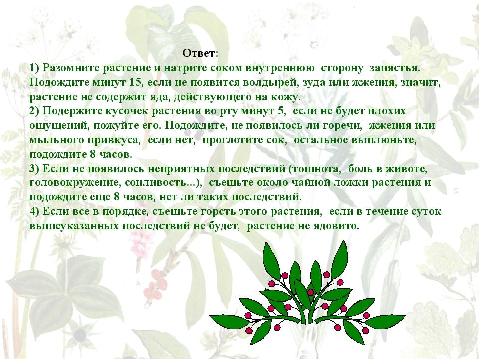 Ответ: 1) Разомните растение и натрите соком внутреннюю сторону запястья. По...