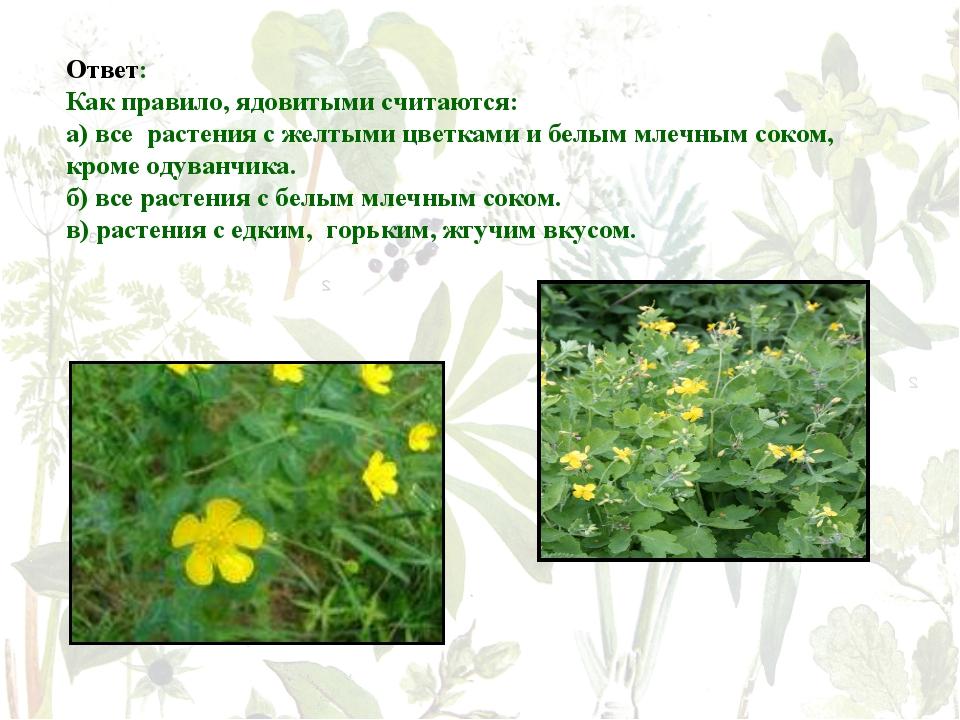Ответ: Как правило, ядовитыми считаются: а) все растения с желтыми цветками...