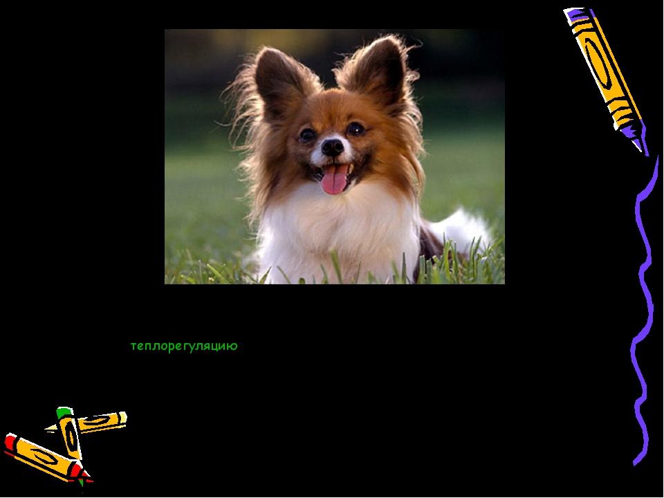 Собакис помощью своего языка ещё также осуществляюттеплорегуляцию— когда и...