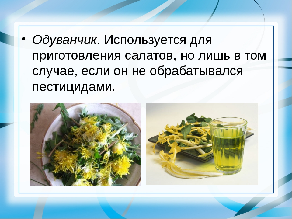 Одуванчик. Используется для приготовления салатов, но лишь в том случае, если...