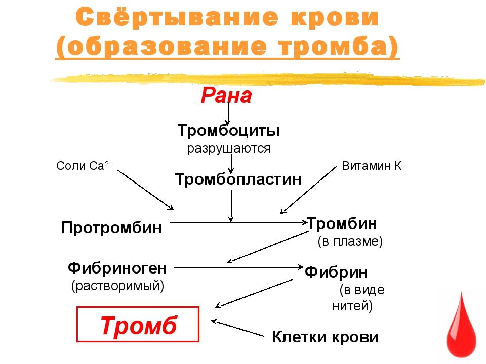 Свёртывание крови (образование тромба) Рана Тромбоциты разрушаются Тромбоплас...