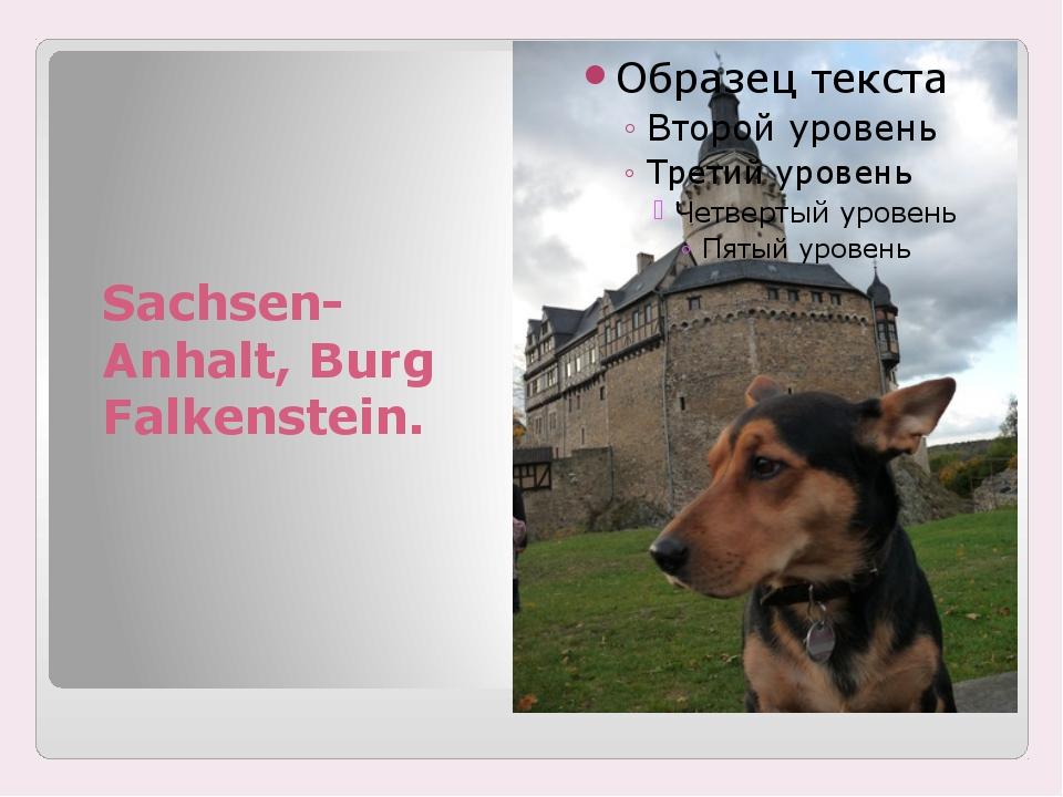Sachsen-Anhalt, Burg Falkenstein.