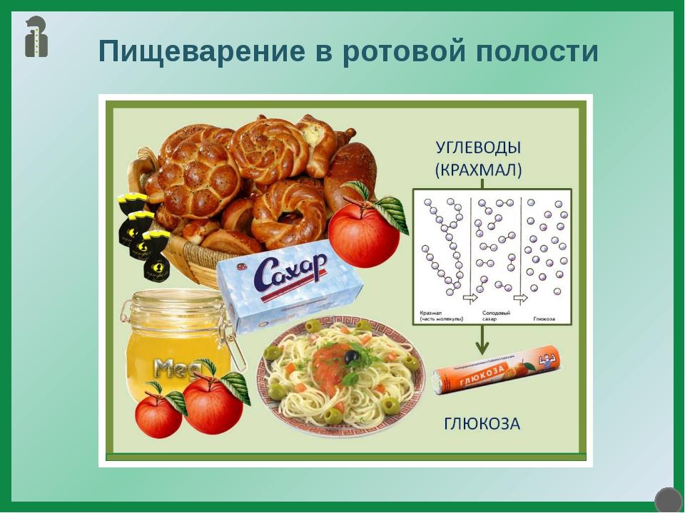 Пищеварение в ротовой полости Ротовая полость является начальным отделом пище...