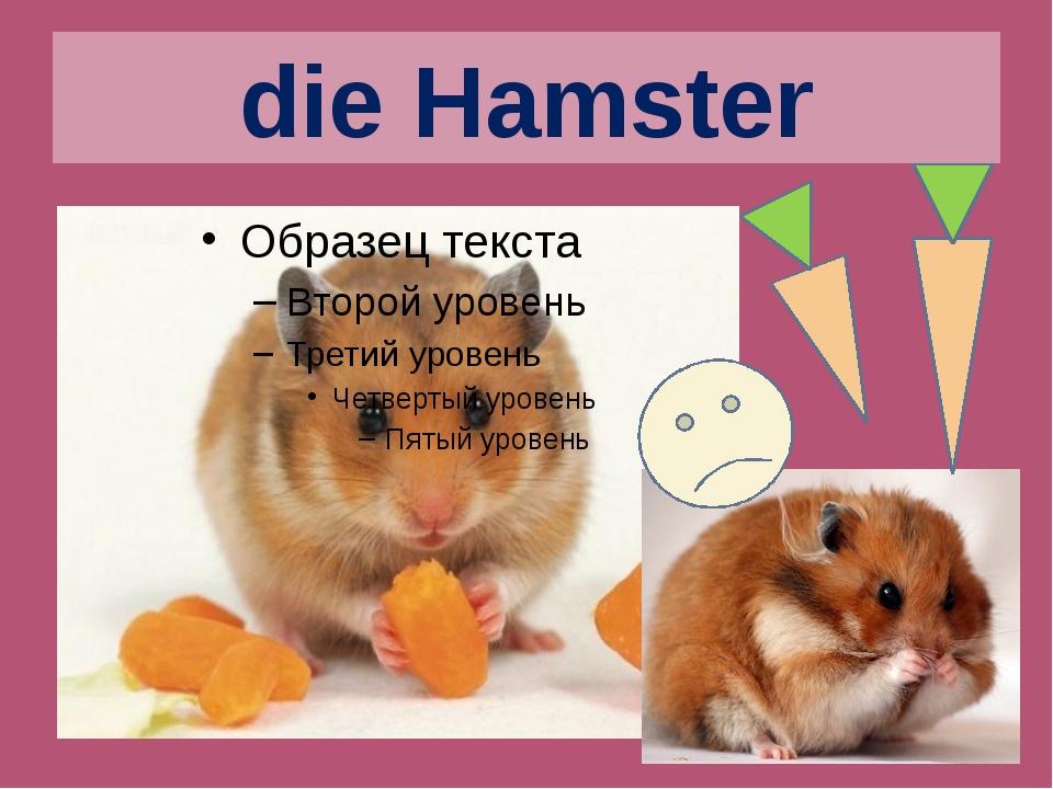 die Hamster