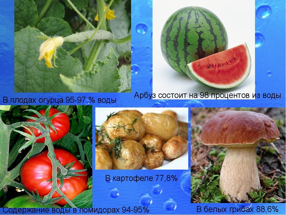 В плодах огурца 95-97% воды Арбуз состоит на 98 процентов из воды Содержание...
