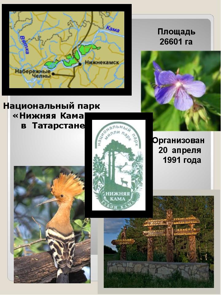 Площадь 26601 га Организован 20 апреля 1991 года Национальный парк «Нижняя К...