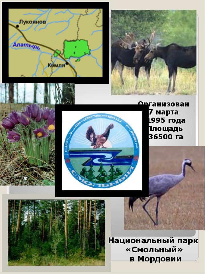 Организован 7 марта 1995 года Площадь 36500 га Национальный парк «Смольный» в...
