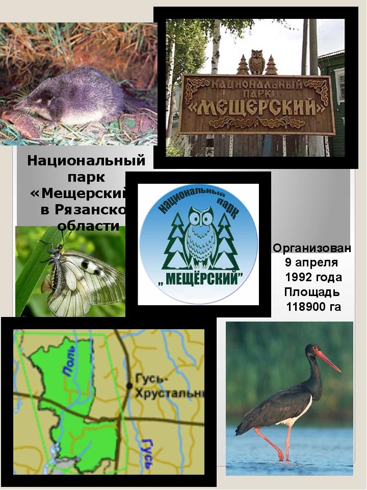 Национальный парк «Мещерский» в Рязанской области Организован 9 апреля 1992 г...