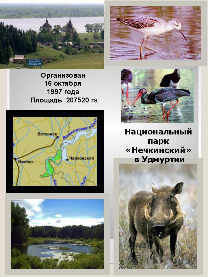 Национальный парк «Нечкинский» в Удмуртии Организован 16 октября 1997 года Пл...