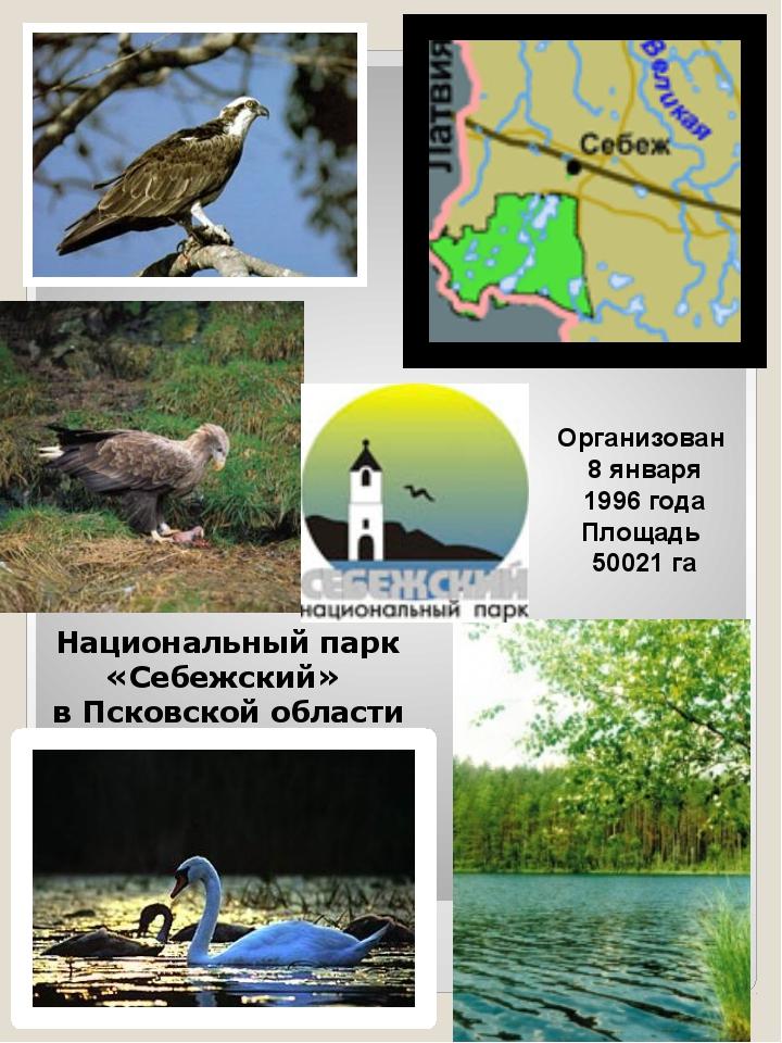 Национальный парк «Себежский» в Псковской области Организован 8 января 1996 г...