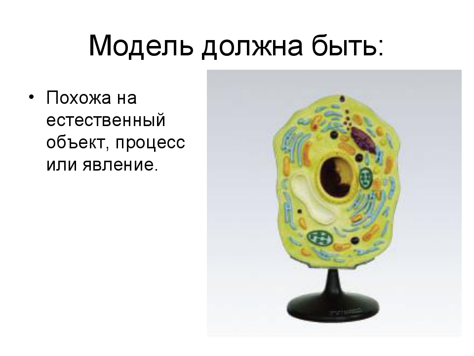 Модель должна быть: Похожа на естественный объект, процесс или явление.