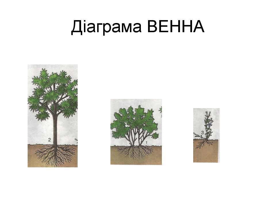 Діаграма ВЕННА