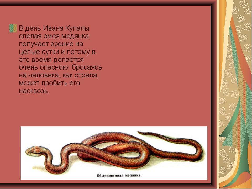 В день Ивана Купалы слепая змея медянка получает зрение на целые сутки и пото...