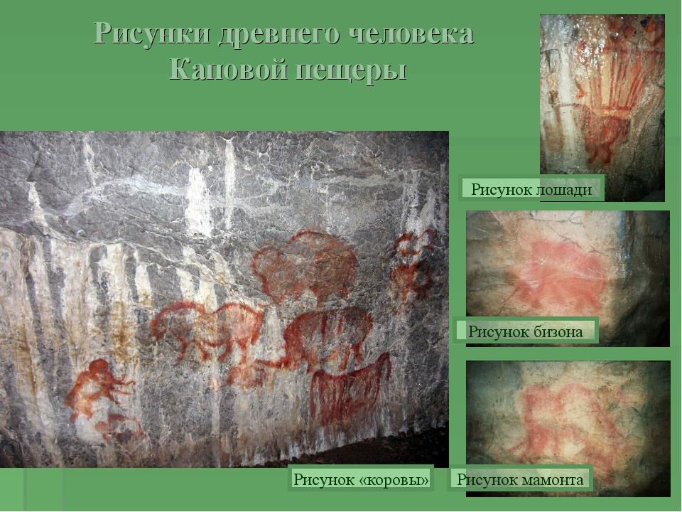 Рисунки древнего человека Каповой пещеры Рисунок лошади Рисунок бизона Рисуно...