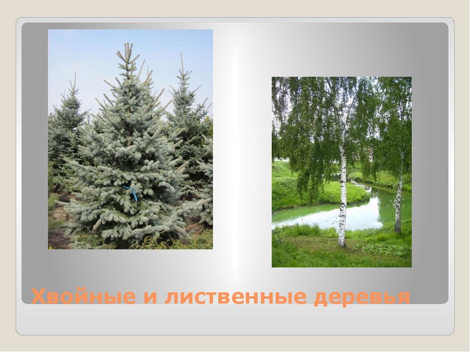 Хвойные и лиственные деревья